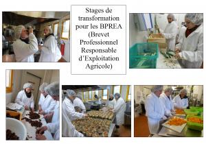 stage transfo BPREA
